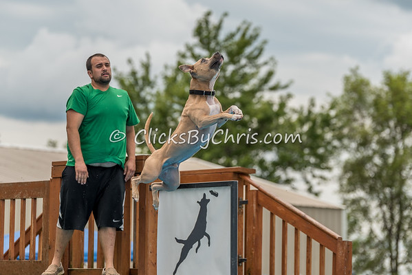 UAD / UKC Dock Diving Competition - Southtown K9 - Sunday, Aug. 6, 2017