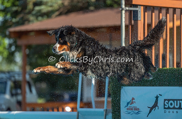 NADD / AKC Dock Diving Trial - Southtown K9 - Friday, Aug. 9, 2019