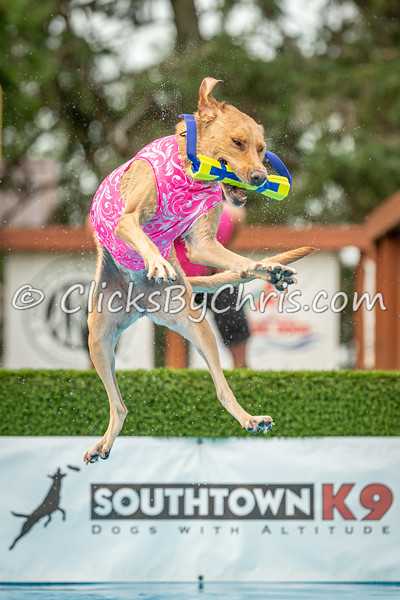 NADD / AKC Dock Diving Trial - Southtown K9 - Saturday, Aug. 10, 2019