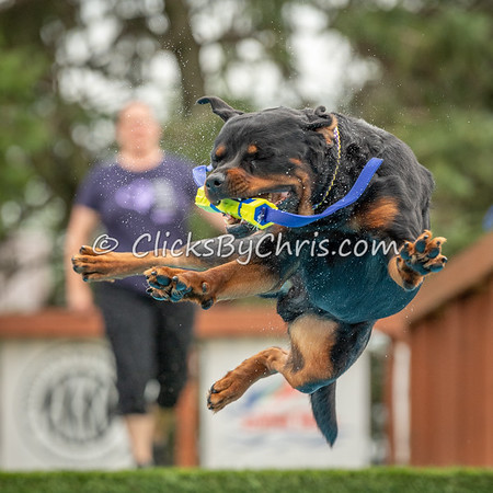 NADD / AKC Dock Diving Trial - Southtown K9 - Sunday, Aug. 11, 2019
