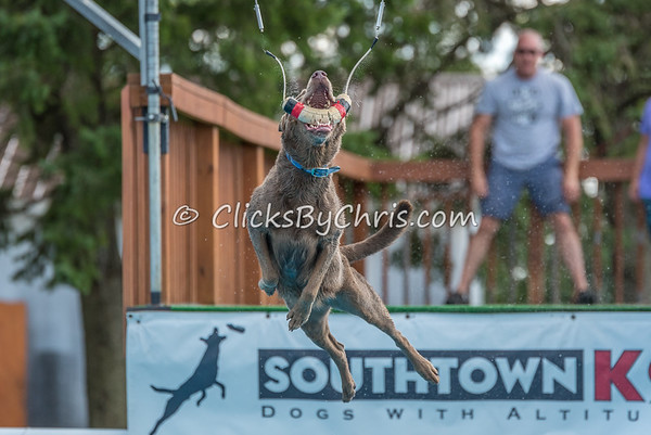 Dock Diving Competition - Southtown K9 - Saturday, Aug. 12, 2017