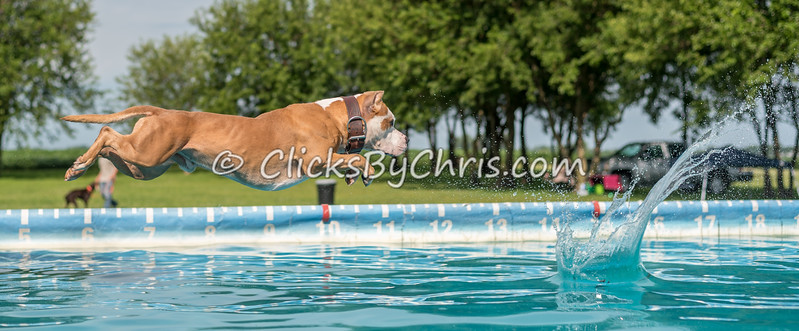 Dock Diving Competition - Southtown K9 - Sunday, Aug. 13, 2017