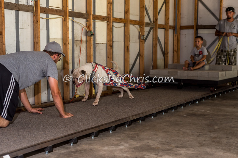 Weight Pull - Southtown K9 - Sunday, Aug. 14, 2016