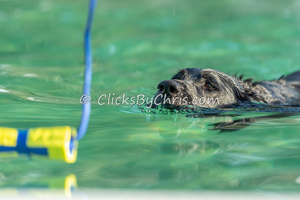 Hydro Dash - NADD / AKC Dock Diving at Southtown K9 on Friday, Aug. 14, 2020