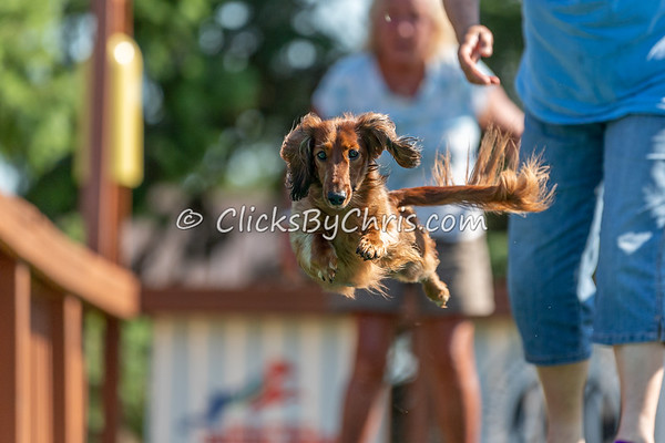 Distance - NADD / AKC Dock Diving at Southtown K9 on Friday, Aug. 14, 2020