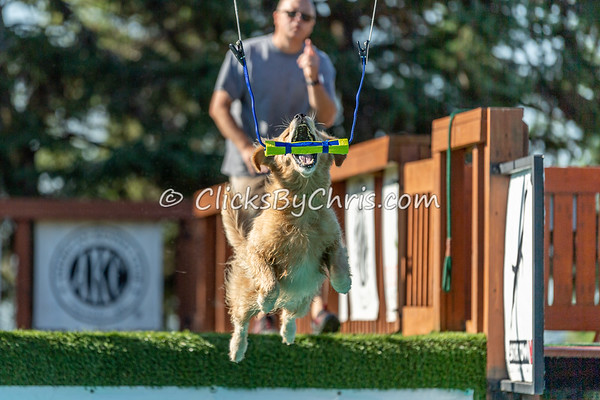 Air Retrieve - NADD / AKC Dock Diving at Southtown K9 on Sunday, Aug. 16, 2020