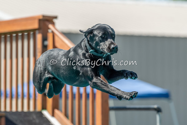 Distance - NADD / AKC Dock Diving at Southtown K9 on Sunday, Aug. 16, 2020