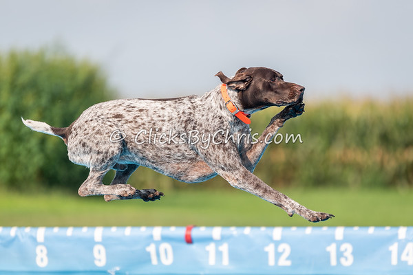 NIKA Dock Diving - Northern Illinois K9 Association - Southtown K9 - Sunday, Aug. 19, 2018