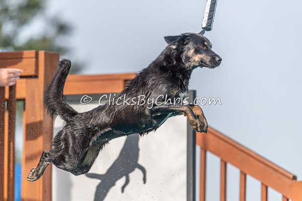 Misc - NIKA / UKC Dock Diving at Southtown K9 on Saturday, Aug. 22, 2020