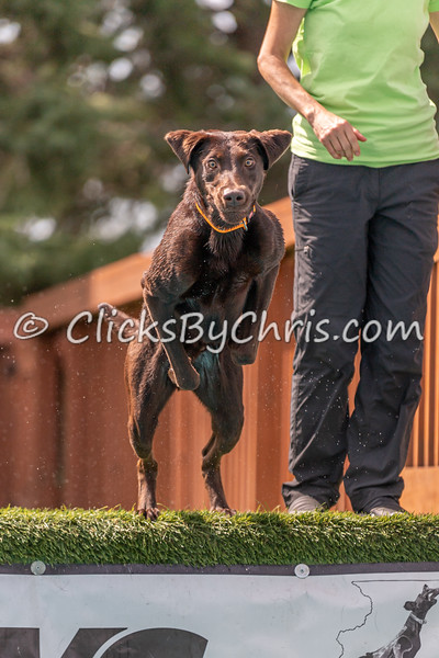 Distance - NIKA / UKC Dock Diving at Southtown K9 on Saturday, Aug. 22, 2020
