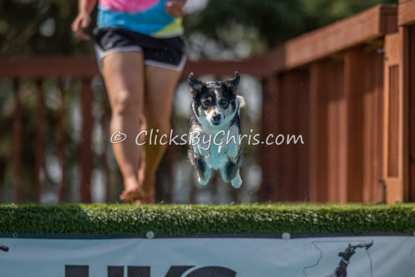 Distance - NIKA / UKC Dock Diving at Southtown K9 on Sunday, Aug. 23, 2020