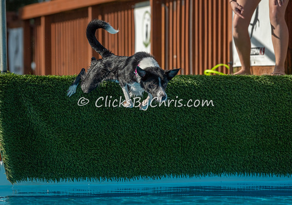 NIKA UKC Dock Jumping Held at Southtown K9 on Sunday, Aug. 25, 2019