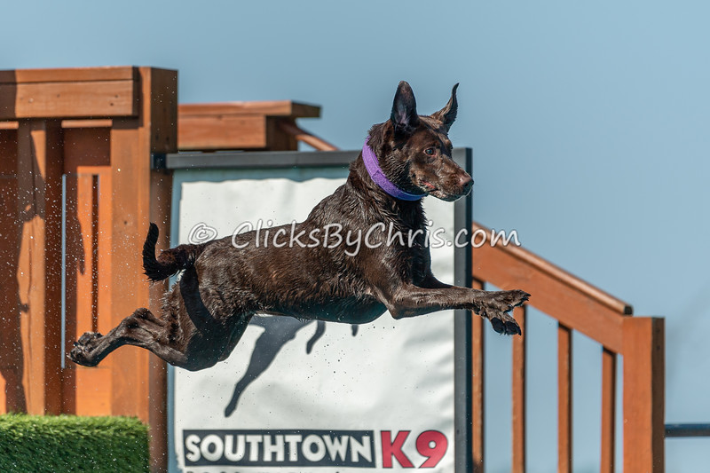 Southtown K9 Fun Jump: Splash-01 08/28/2021