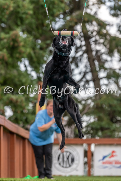 Southtown K9 Fun Jump: Vertical 08/28/2021