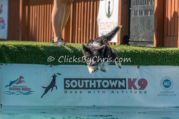 Southtown K9 NADD Season Shutdown: Splash-08 09/05/2021