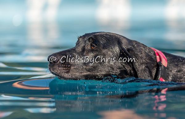 Hydro-Dash  - NADD / AKC Dog Dock Diving at Southtown K9
