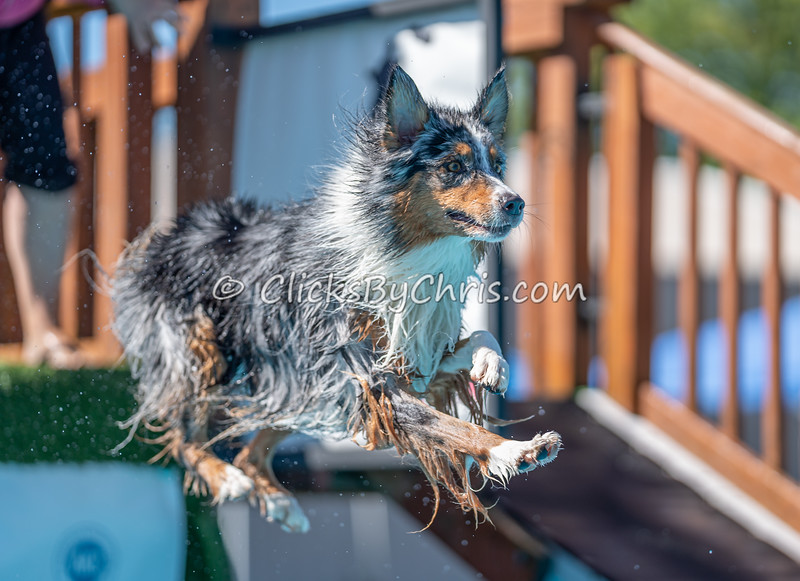Splash-01-03 - NADD / AKC Dog Dock Diving at Southtown K9
