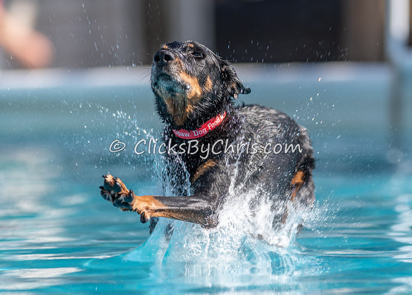 Splash-04  - NADD / AKC Dog Dock Diving at Southtown K9