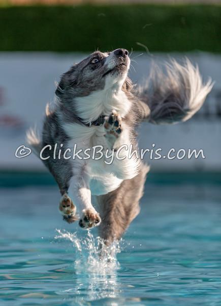 Splash-04  - NADD / AKC Dog Dock Diving at Southtown K9