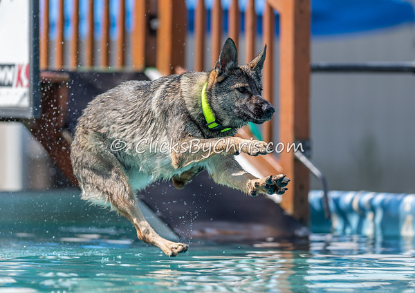 Splash-13  - NADD / AKC Dog Dock Diving at Southtown K9