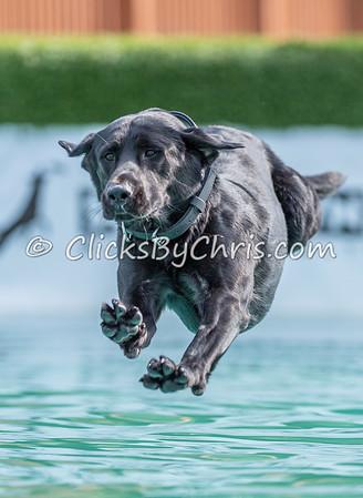 Splash-15  - NADD / AKC Dog Dock Diving at Southtown K9