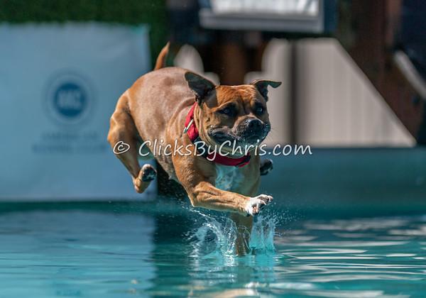 Splash-05  - NADD / AKC Dog Dock Diving at Southtown K9