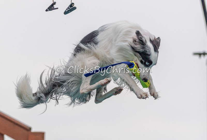 Air-Retrieve  - NADD / AKC Dog Dock Diving at Southtown K9