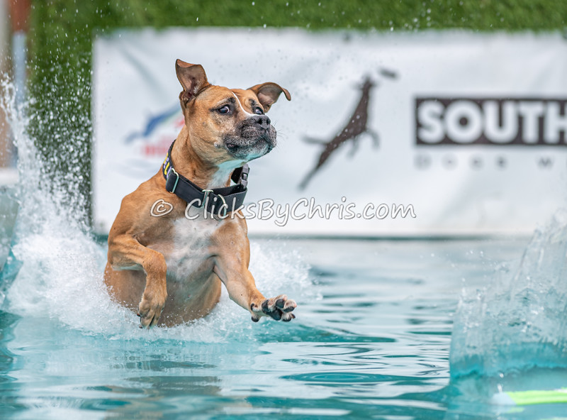 Splash-09  - NADD / AKC Dog Dock Diving at Southtown K9