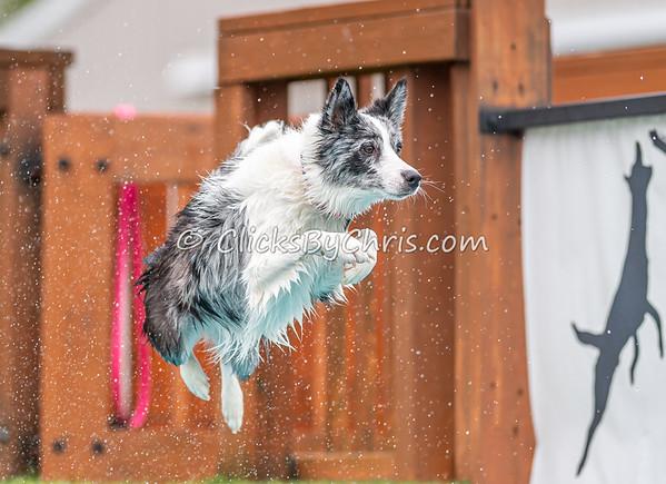 Splash-09  - NADD / AKC Dog Dock Diving at Southtown K9