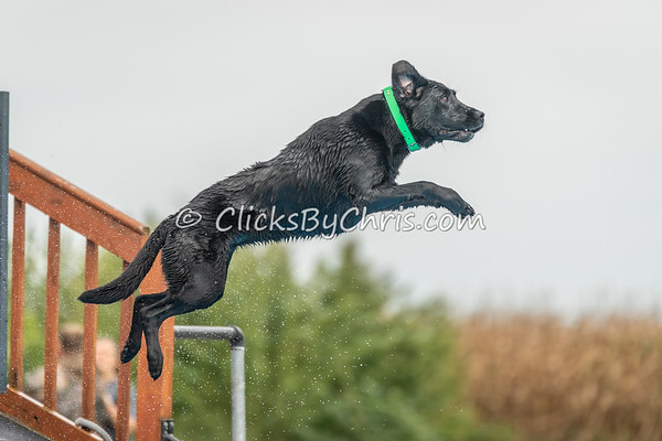 NADD / AKC Dock Diving Trial - Tournament of Champions - Southtown K9 - Saturday, Sept. 8, 2018