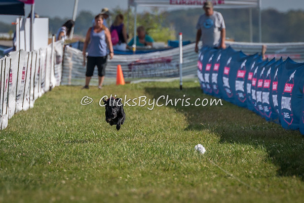 Eukanuba Performance Games - Roberts Centre - Saturday, Sept. 16, 2017