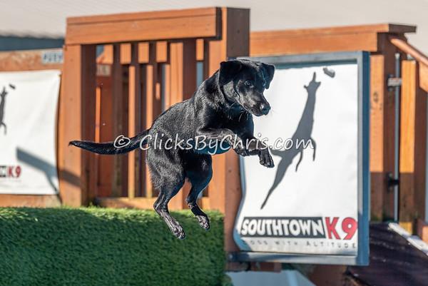 NIKA UKC Dock Jumping Held at Southtown K9 on Saturday, Sept. 14, 2019