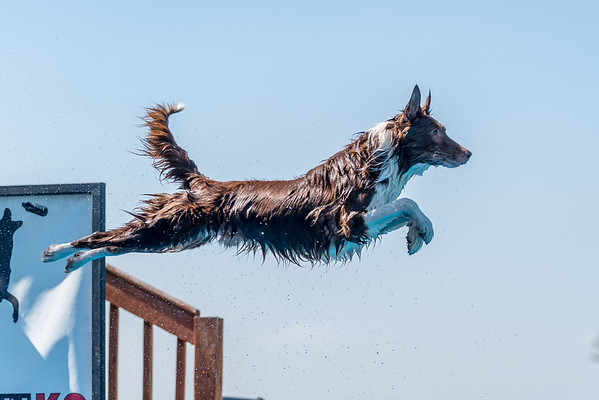 NADD / AKC Dock Diving Trial - Southtown K9 - Sunday, Sept. 24, 2017