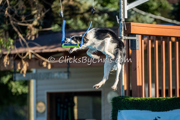 NADD / AKC Dock Diving Trial - Southtown K9 - Saturday, Sept. 22, 2018