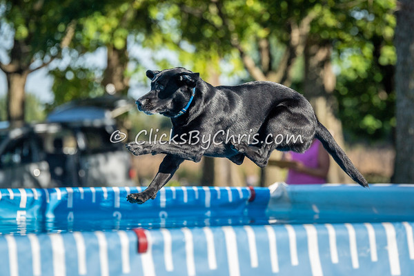 NADD / AKC Dock Diving Trial - Southtown K9 - Sunday, Sept. 23, 2018