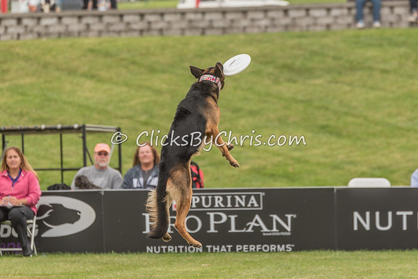2016 Purina Pro Plan Incredible Dog Challenge - Purina Farms - Friday, Sept. 30, 2016