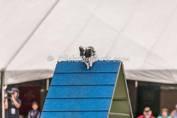 Purina Pro Plan Incredible Dog Challenge - Purina Farms - Saturday, Oct. 1, 2016
