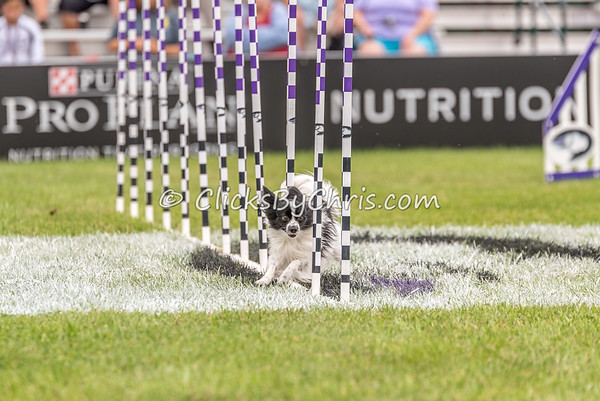 Purina Pro Plan Incredible Dog Challenge - Purina Farms - Saturday, Oct. 1, 2016
