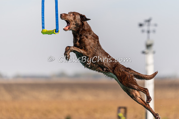 Air-Retrieve  - 2020 NADD North Central Regionals Dog Dock Diving at Southtown K9