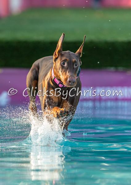 Splash-04  - 2020 NADD North Central Regionals Dog Dock Diving at Southtown K9