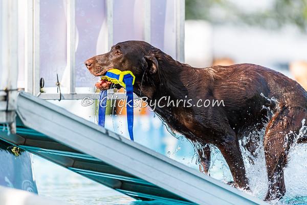 Splash-05  - 2020 NADD North Central Regionals Dog Dock Diving at Southtown K9