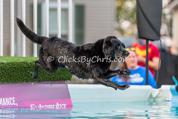 Hydro-Dash  - 2020 NADD North Central Regionals Dog Dock Diving at Southtown K9