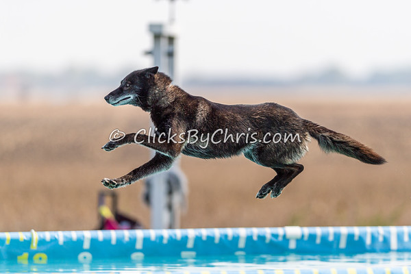 Splash-09  - 2020 NADD North Central Regionals Dog Dock Diving at Southtown K9