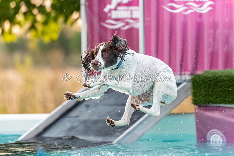 Splash-10  - 2020 NADD North Central Regionals Dog Dock Diving at Southtown K9