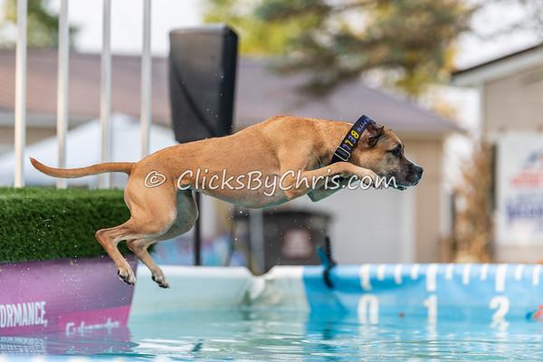 Splash-11  - 2020 NADD North Central Regionals Dog Dock Diving at Southtown K9