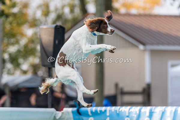 Splash-11  - 2020 NADD North Central Regionals Dog Dock Diving at Southtown K9
