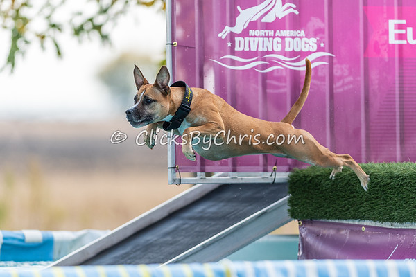 Splash-12  - 2020 NADD North Central Regionals Dog Dock Diving at Southtown K9