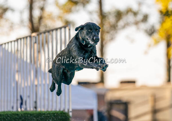 Splash-01 - 2020 NADD North Central Regionals Dog Dock Diving at Southtown K9