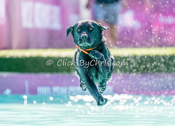 Splash-03 - 2020 NADD North Central Regionals Dog Dock Diving at Southtown K9