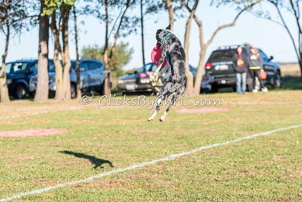 UpDog Challenge - Saturday, Oct. 17, 2015 - Frame: 2991